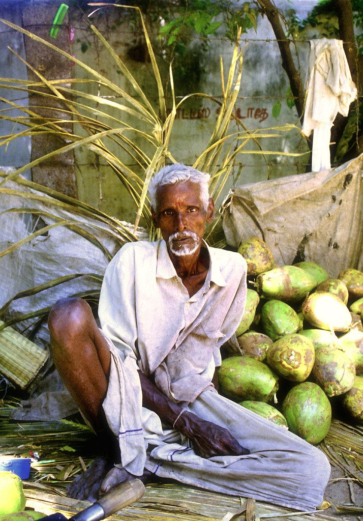Coconut Seller In Thiravanamalai, India