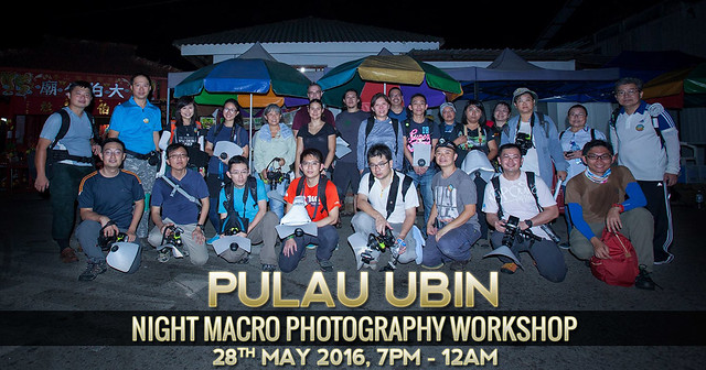 Night Macro Workshop at Pulau Ubin