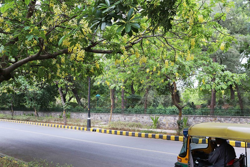 City Season - Amatlas in Decline, Amrita Shergil Marg