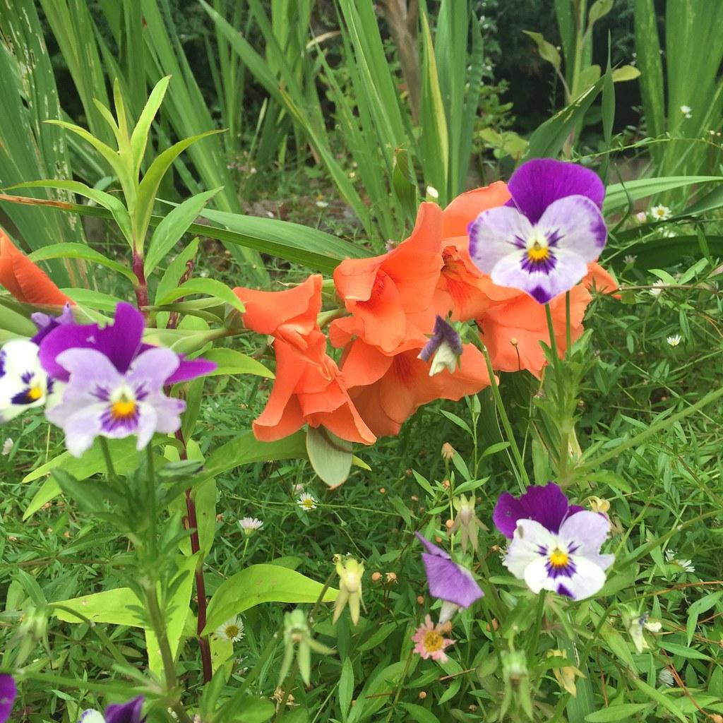 flowers June 2016