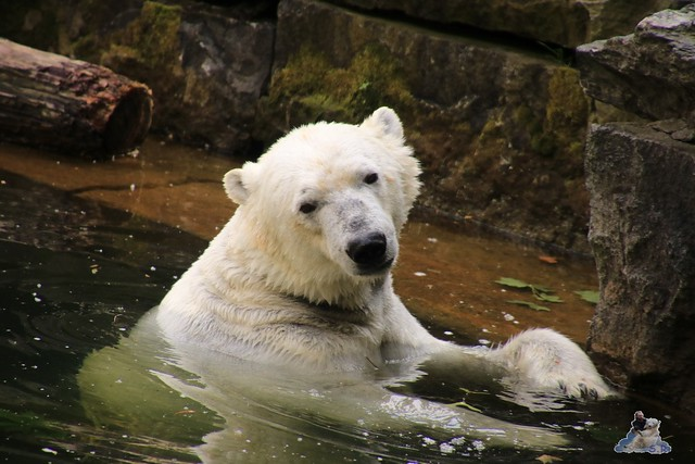 Tierpark Berlin 29.05.2016   086
