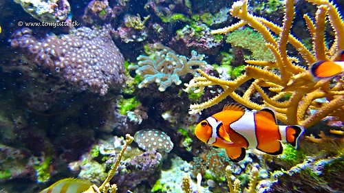 finding nemo belonging When i look at you, i am home, is what dora said to her little lost orange friend finding nemo is, as jonathan jansen told 850 rustenburg.