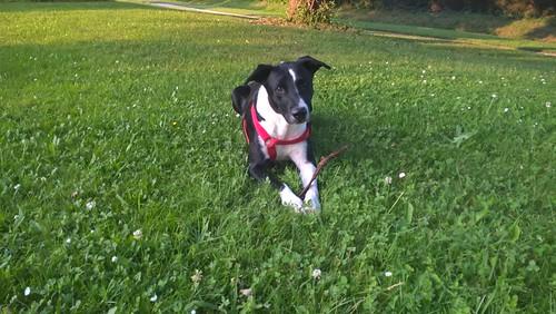 nos amis les chiens - Page 3 27249542724_6b507c1fa2