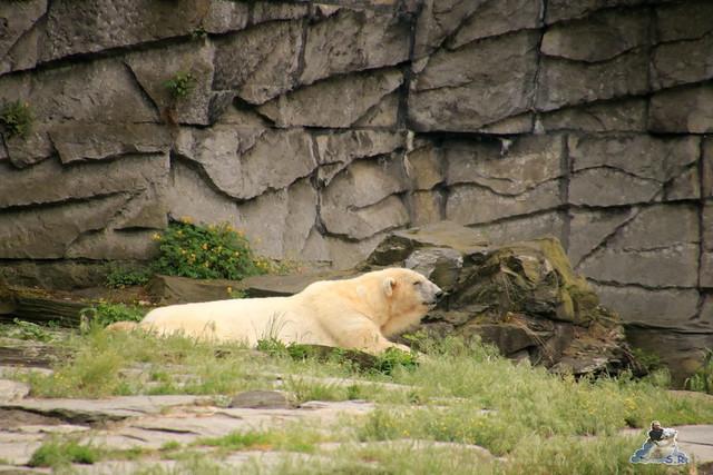 Tierpark Berlin 28.05.2016  0292