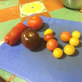 #gardensbounty #tomatoes 🍅