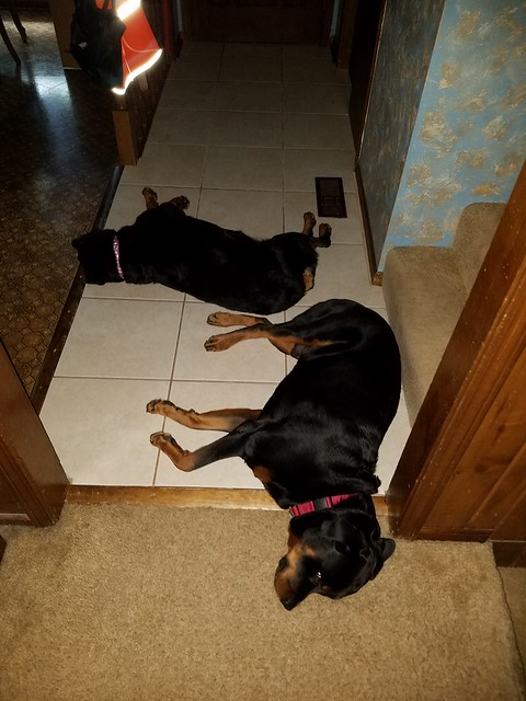 Porthos and Lexy guarding the front entrance to our home.