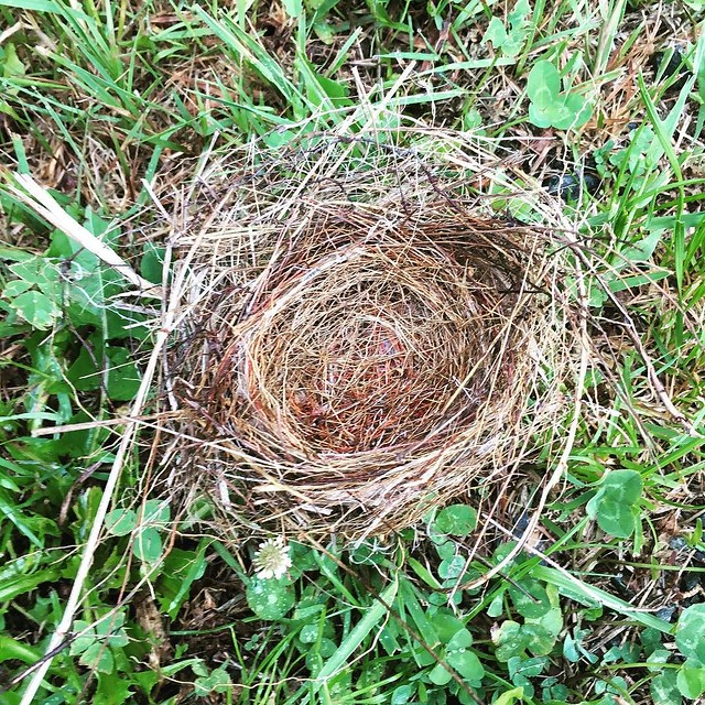 Birds nest on the ground.