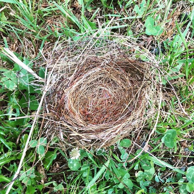Birds nest on the ground.
