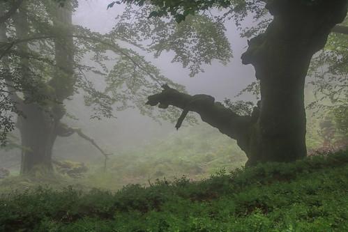 Parque Natural de #Gorbeia #Orozko #DePaseoConLarri #Flickr - -636