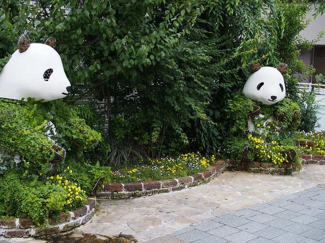 Panda greenery