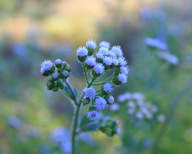 Flowers - Victoria Falls