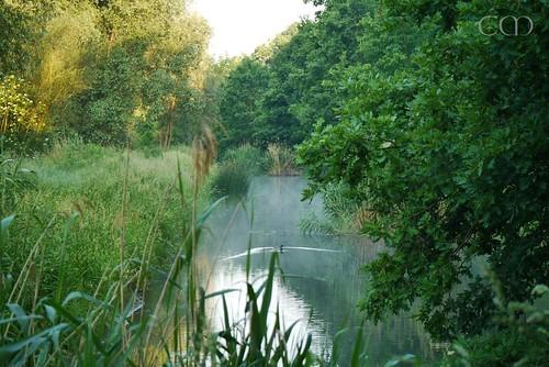 Along a misty moat...