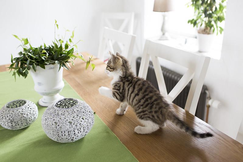 kattungar, kalvar och några österlenpärlor
