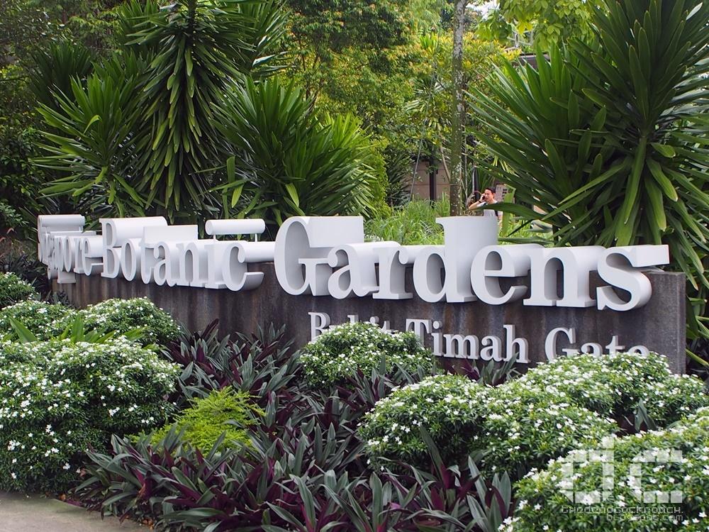 botanic gardens, bukit timah gate, personal, places of interest, singapore, singapore botanic gardens, swan lake, tanglin gate, unesco, water monitor lizard, where to go in singapore,