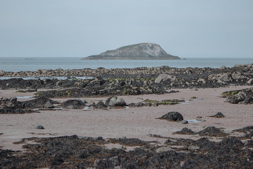 Rockpools at North Berwick - 09