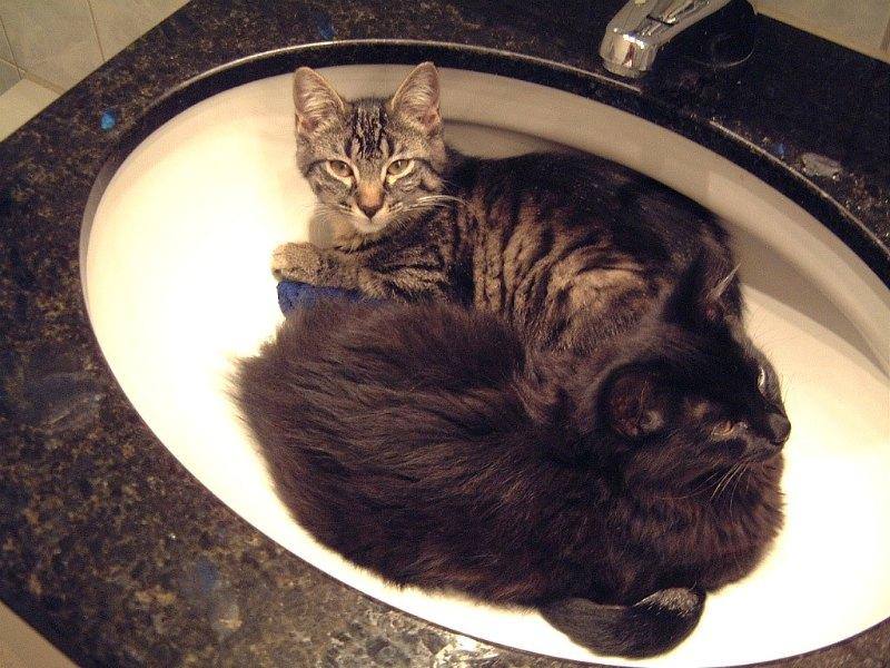 Tabby and Nera  kittens