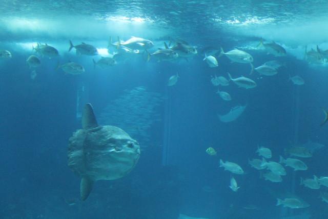 oceanario-lisboa6