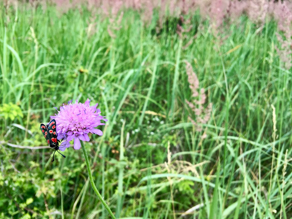 Throngs of butterflies and insects in the field