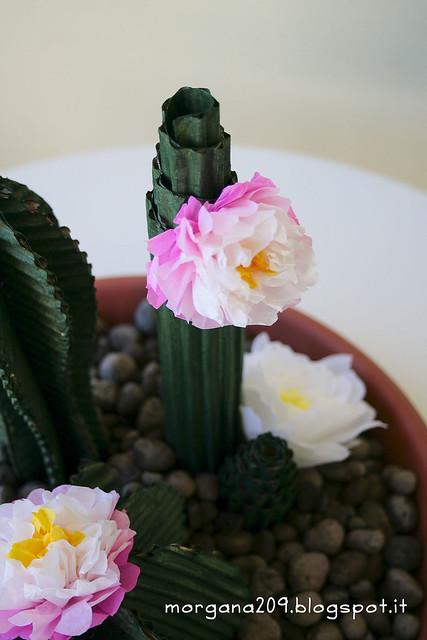 Cactus_07w