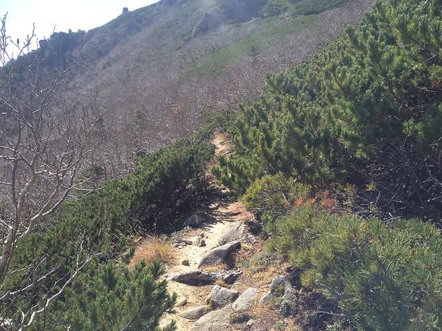 木曽駒ヶ岳 濃ヶ池 ハイマツ帯