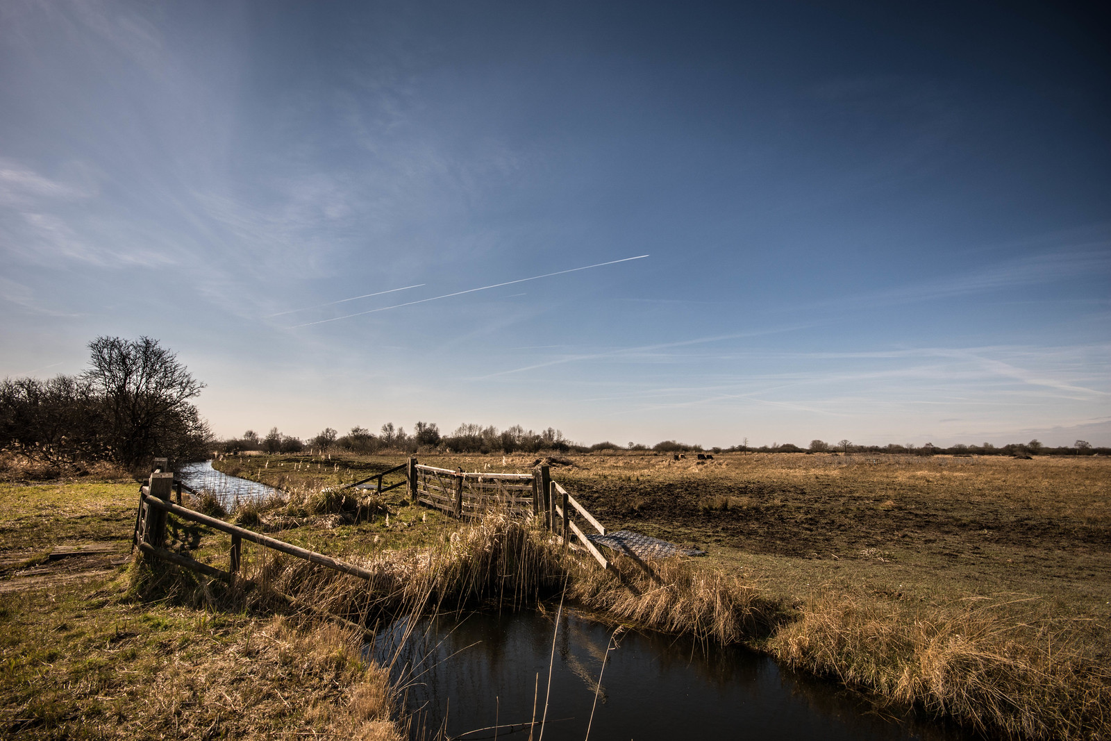 Wicken Fen - April 2016-15