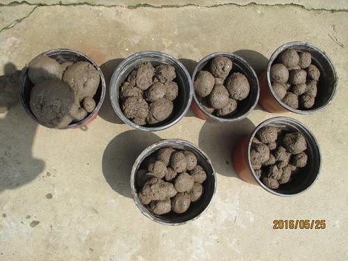 Seed ball 2