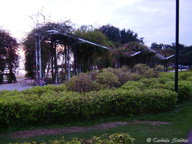 Bougainvillea Garden 02