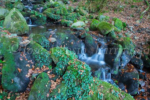 Parque Natural de #Gorbeia #DePaseoConLarri #Flickr      -1330