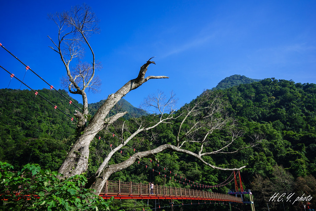 斑駁的吊橋 矗立的老樹