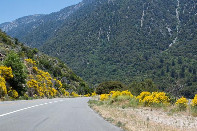 wildflowers by highway 38