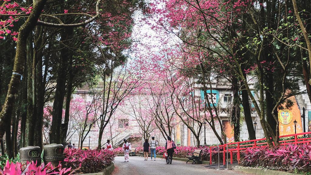 cherry-blossom-formosan-aboriginal-culture-village