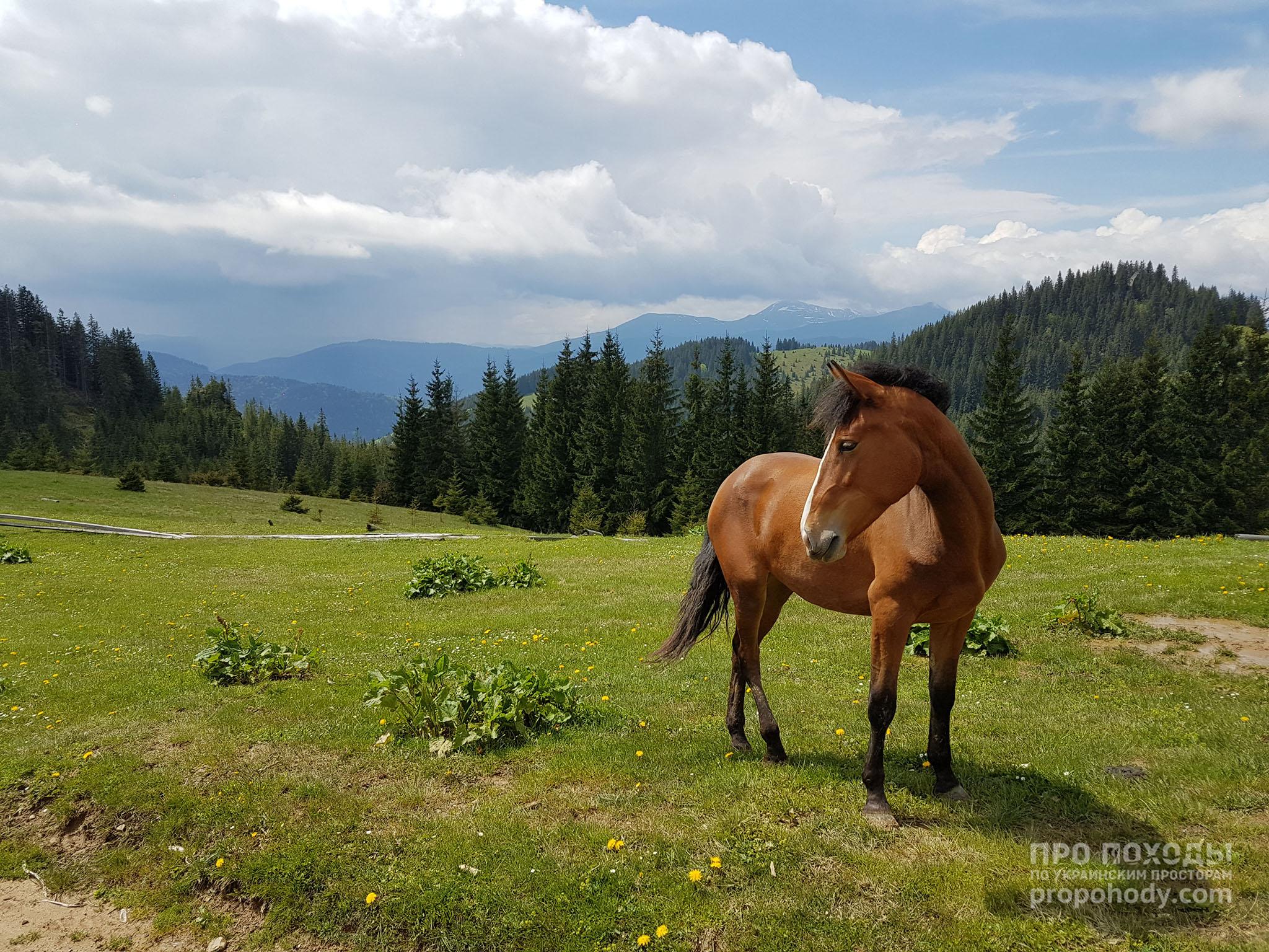 Гринявські гори. Кінь на пасовищі