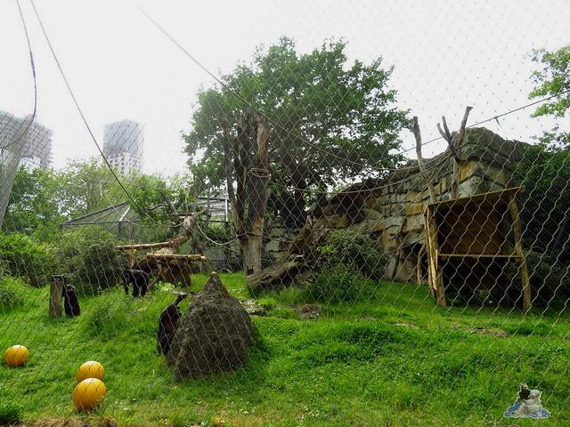 Zoo Berlin 27.05.2016   094