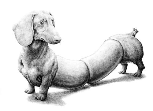 Sausage Dog Black And White