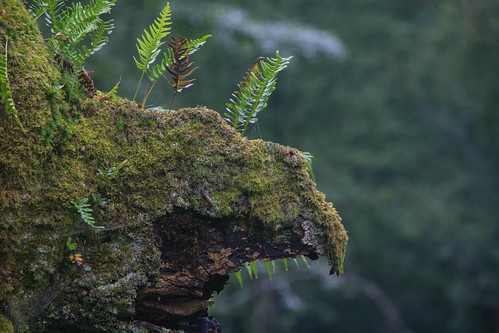 Parque Natural de #Gorbeia #DePaseoConLarri #Flickr - -885