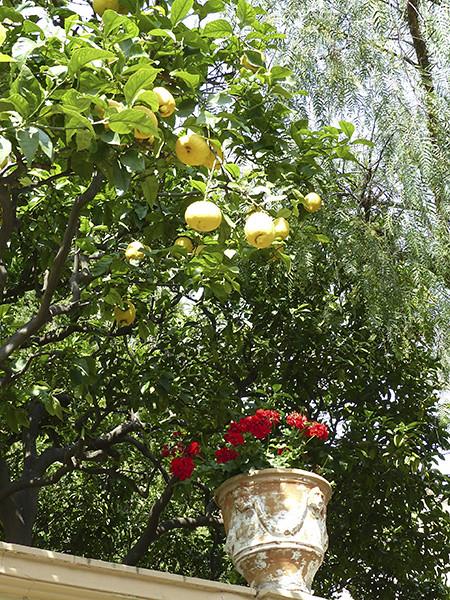 citrons et geranium