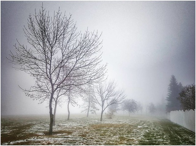 Winter has arrived ❄☃ ... #winter #yycweather #calgaryweather #calgarysnow #snow #foggyday #foggy #freezingdrizzle #yycparks #yycsnow #yycnow #yycbuzz #calgarynow #calgarybuzz #capturecalgary #calgaryisbeautiful #explorecalgary #calgaryisawesome #nwcalga