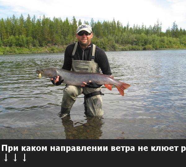на что ловят на реке