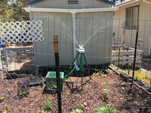 Checking the Garden Irrigation - The sprinkler is on a ...