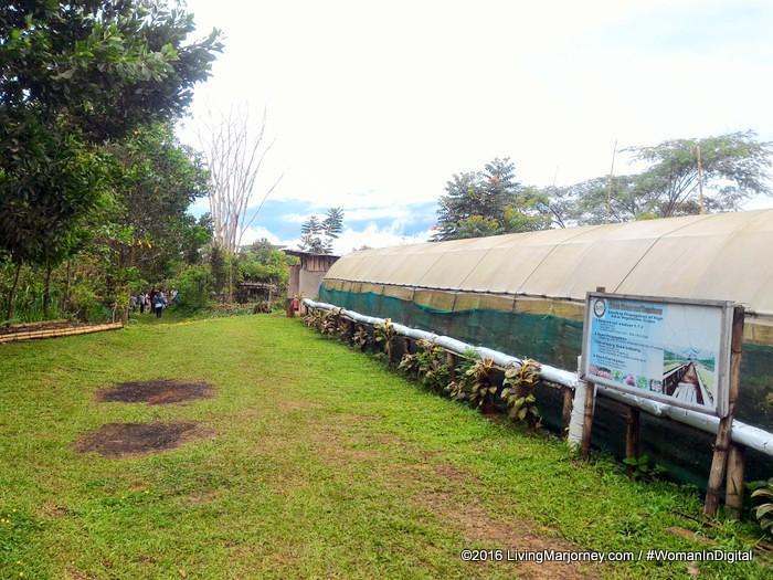LivingMarjorney-Binahon-Agroforestry-Farm-Bukidnon (52)