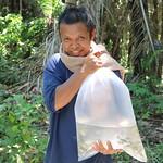 Distribution of GIFT fingerlings, Timor-Leste. Jharendu Pant, 2016.