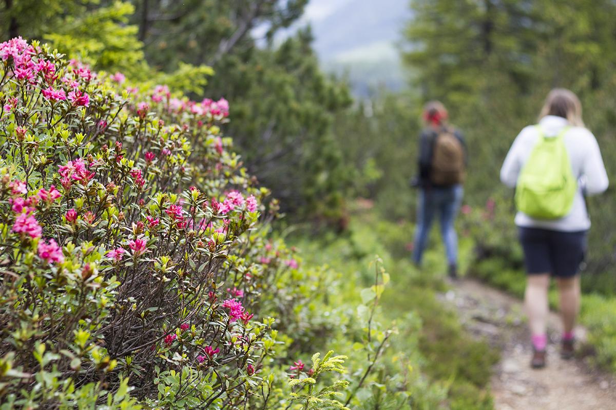 alpenrose-austria-st-anton