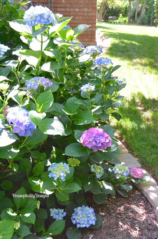 Hydrangea bush - Housepitality Designs
