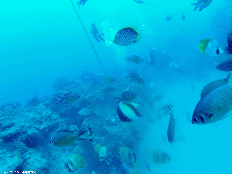 2015.10 小琉球潛水