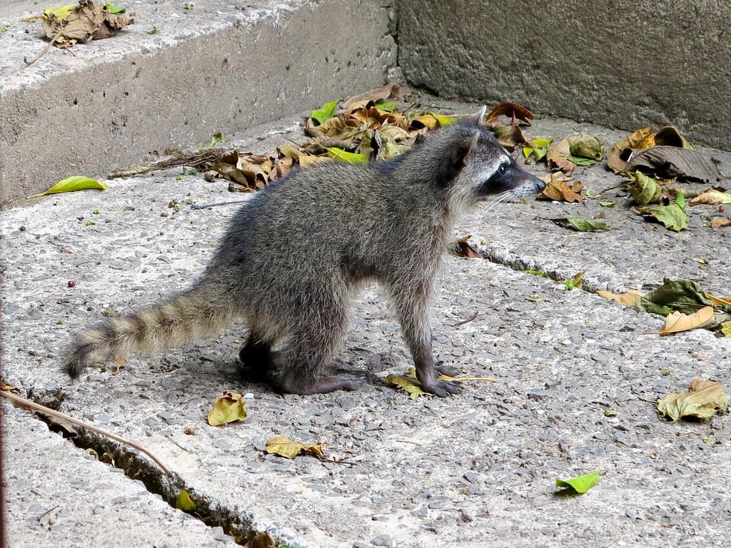 Fauna en Monteverde