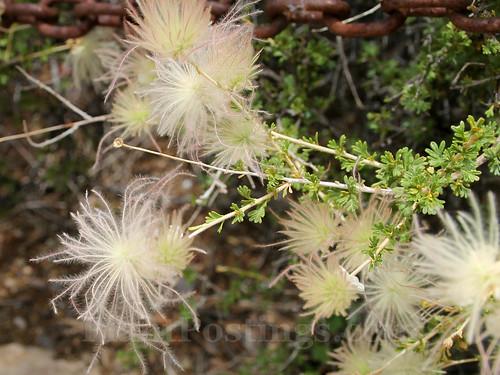 seeds & foliage