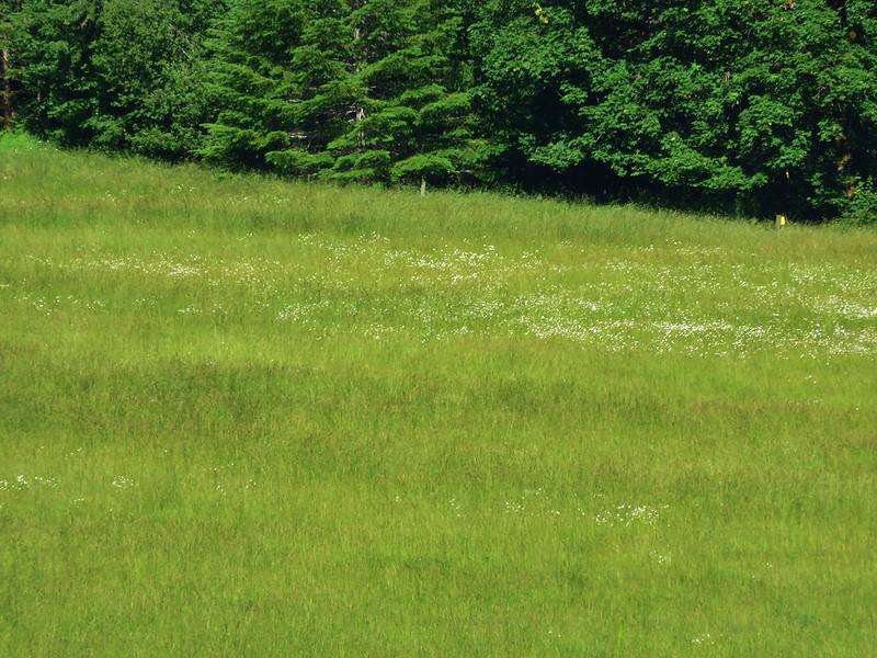 Walton Ranch meadow