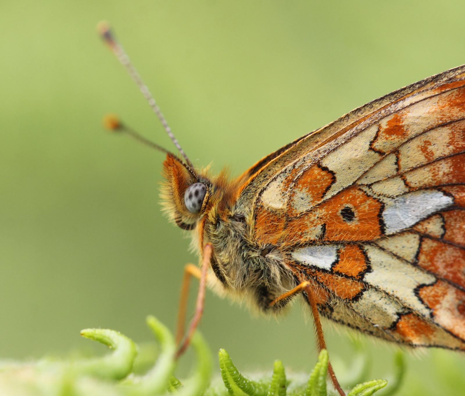butterfliesandrooks0028
