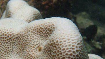 ทช. ออกคำสั่งคุ้มครองพื้นที่ปะการัง 7 แห่ง