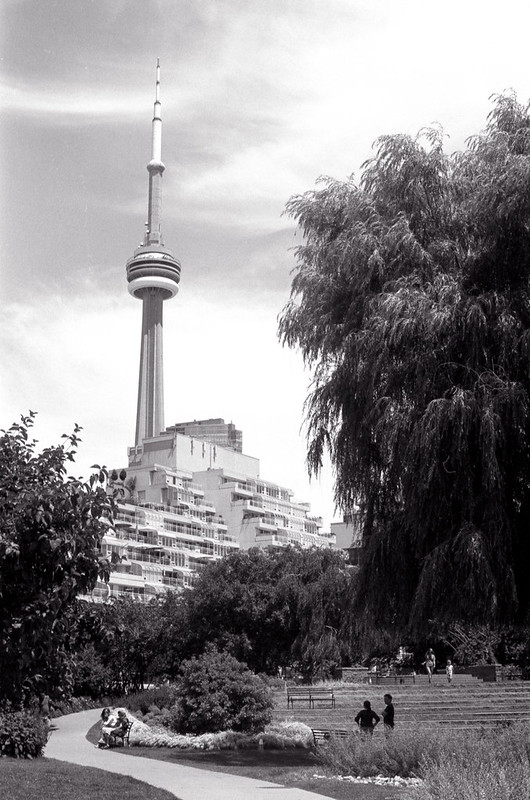 CN Tower from the Music Garden on Saturday Afternoon